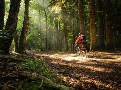 foresta-grande-bici-768x578